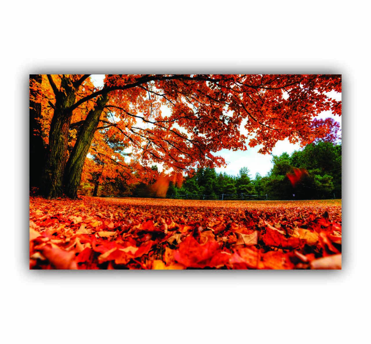 Quadro Árvore Outono Vermelha- Tela Única