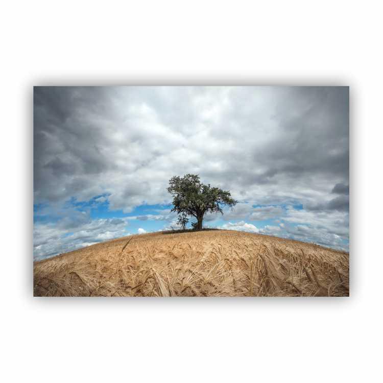 Quadro Campo de Trigo Árvore da Vida - Tela Única