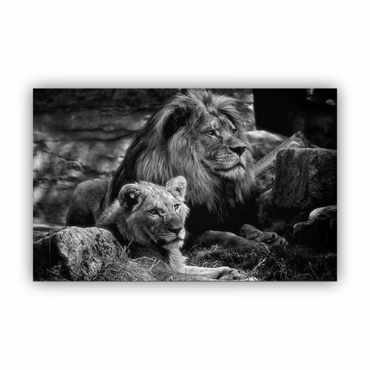 Quadro Casal Leão e Leoa Olhos Coloridos Tela Única