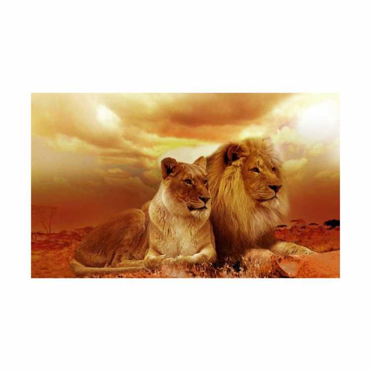 Quadro Casal Leão e leoa Por do Sol Luxo - Tela Única