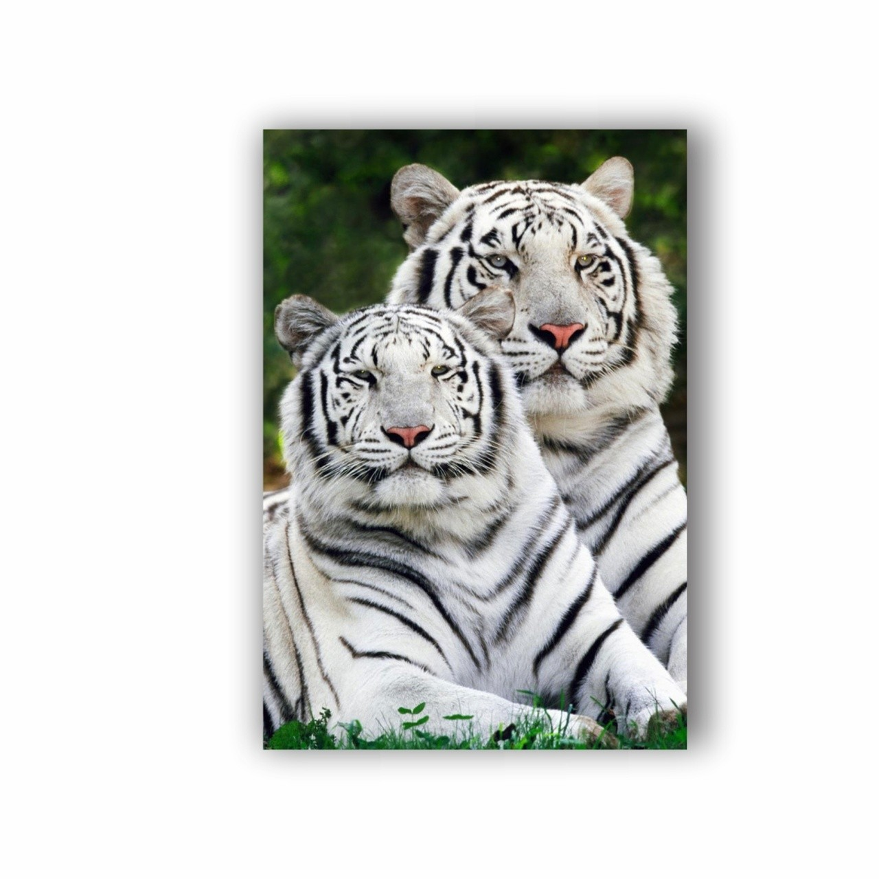 Quadro Casal Tigre Vertical - Tela Única