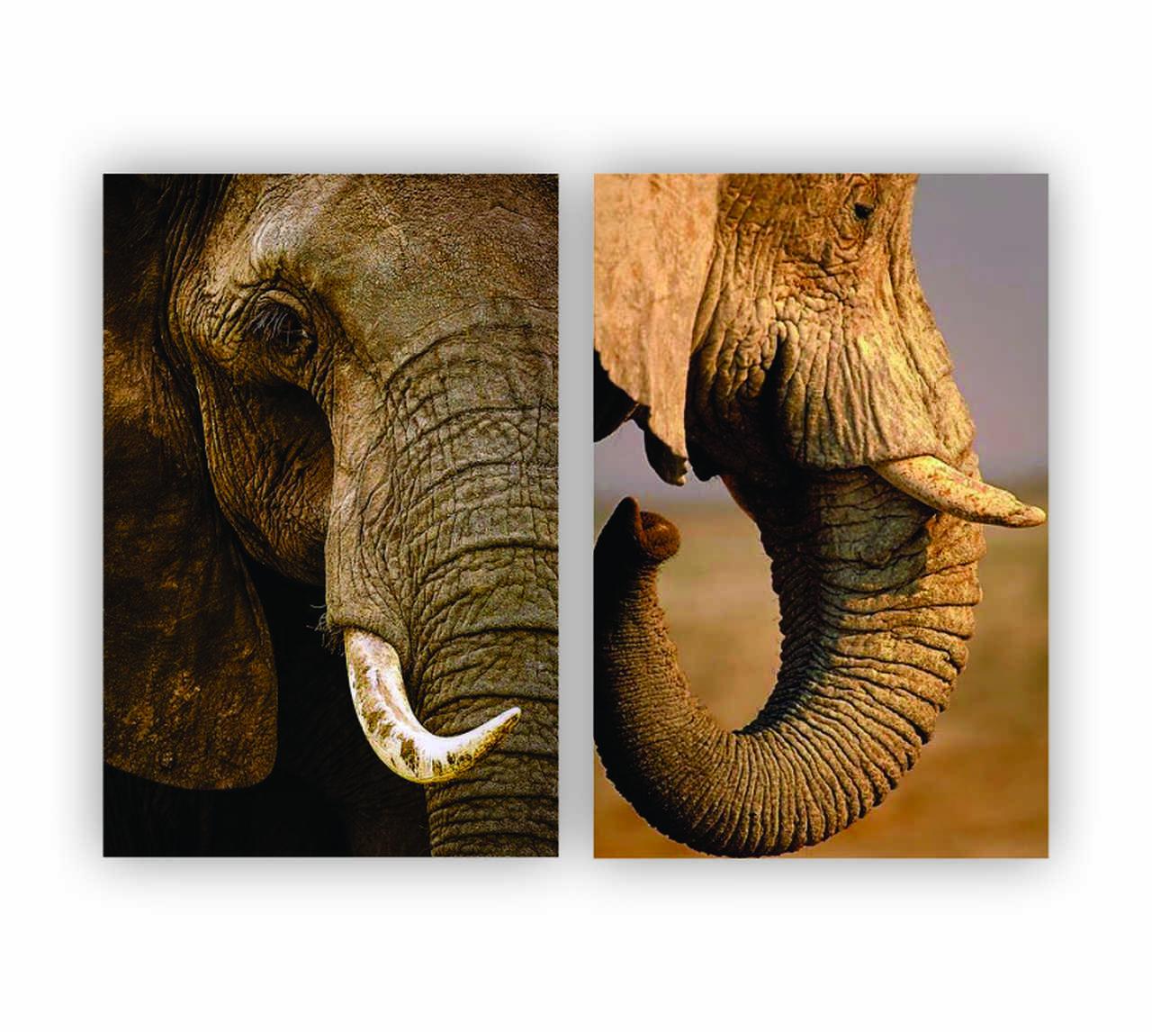 Quadro Elefante Animal Savana -  Kit 2 telas
