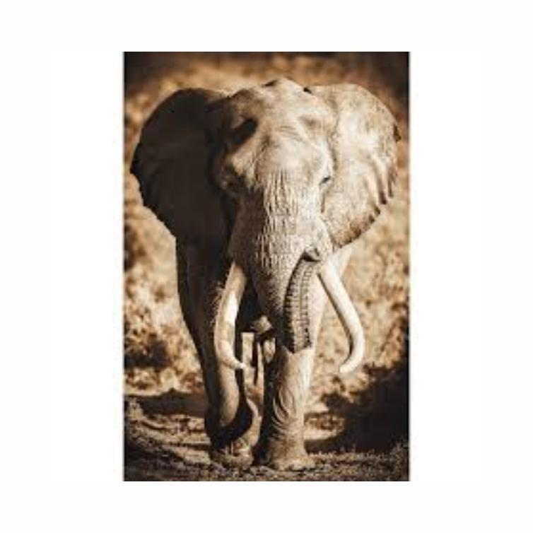 Quadro Elefante Vertical Luxo Sépia - Tela Única