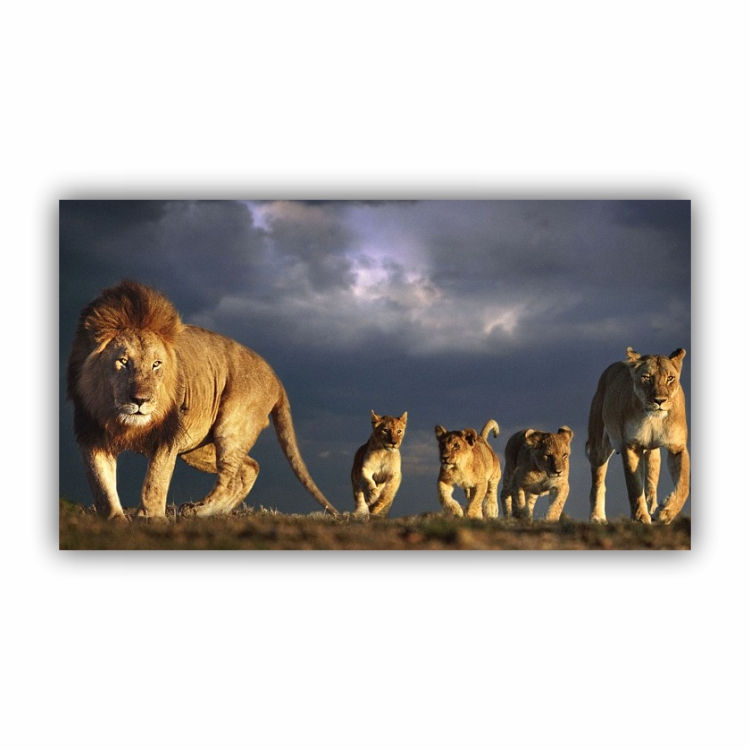 Quadro Família de Leão 3 Filhotes Tempestade Paisagem - Tela Única