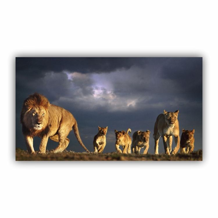 Quadro Família de Leão 4 Filhotes Completa - Tela Única