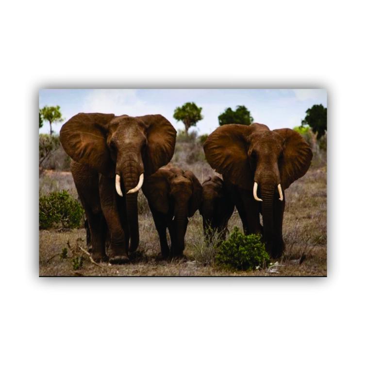 Quadro Família Elefante Horizontal - Tela Única