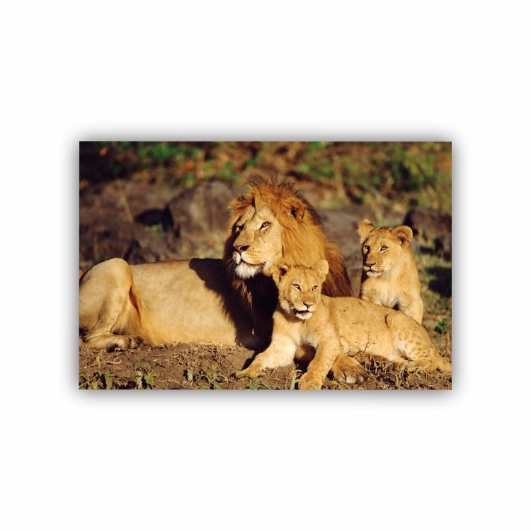 Quadro Família Leão 1 Filhote Horizontal - Tela Única