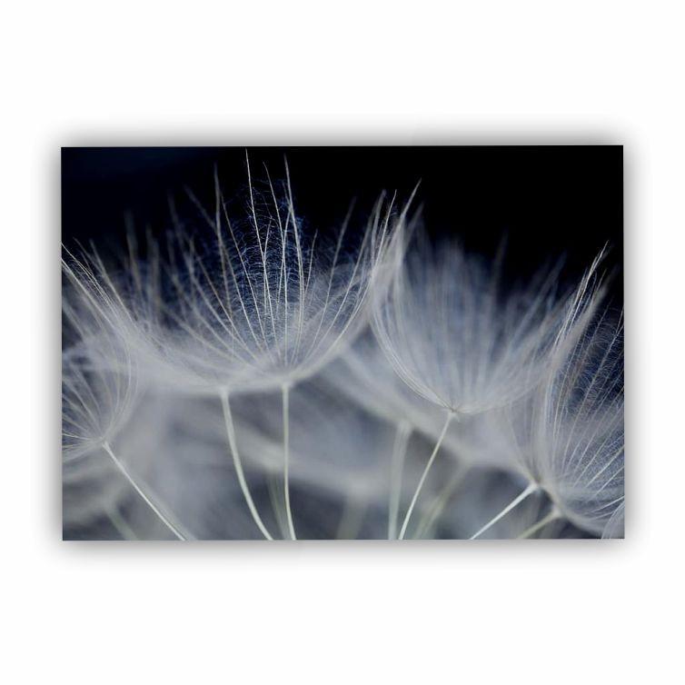 Quadro Flor Dente de Leão Branco e Preto - Tela Única