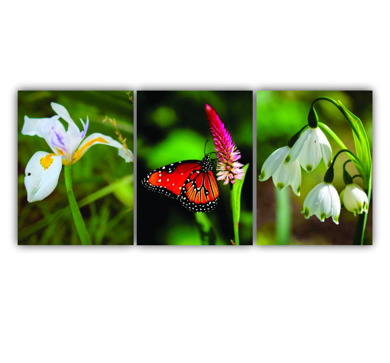 Quadro Flor e Borboleta Primavera Colors - Kit 3 telas