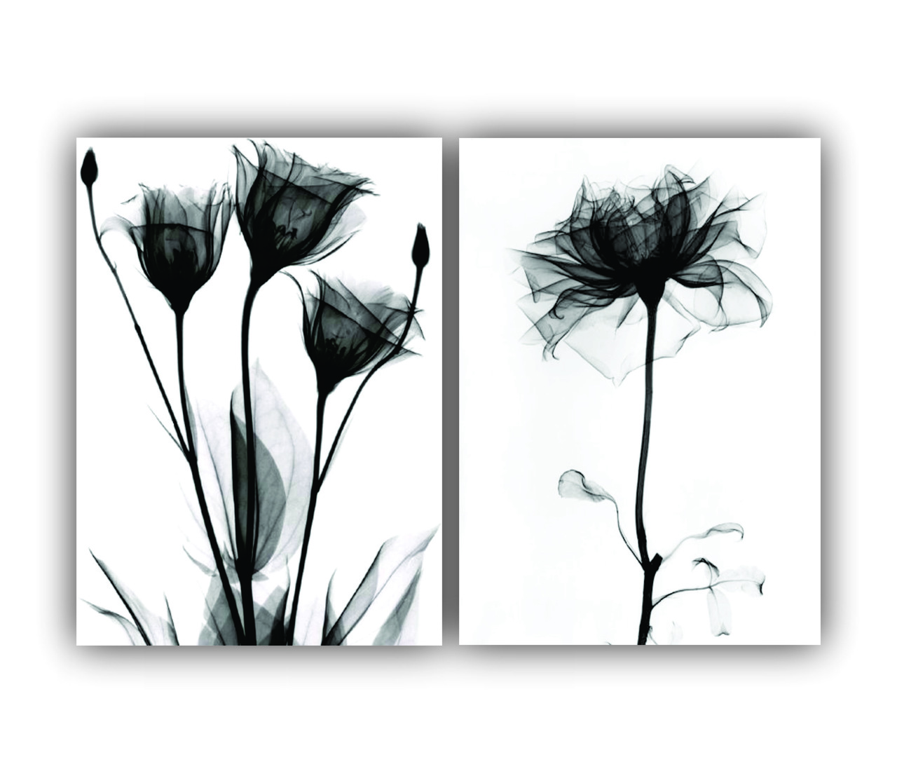 Quadro Flores Sombreamento Moderno -  Kit 2 telas