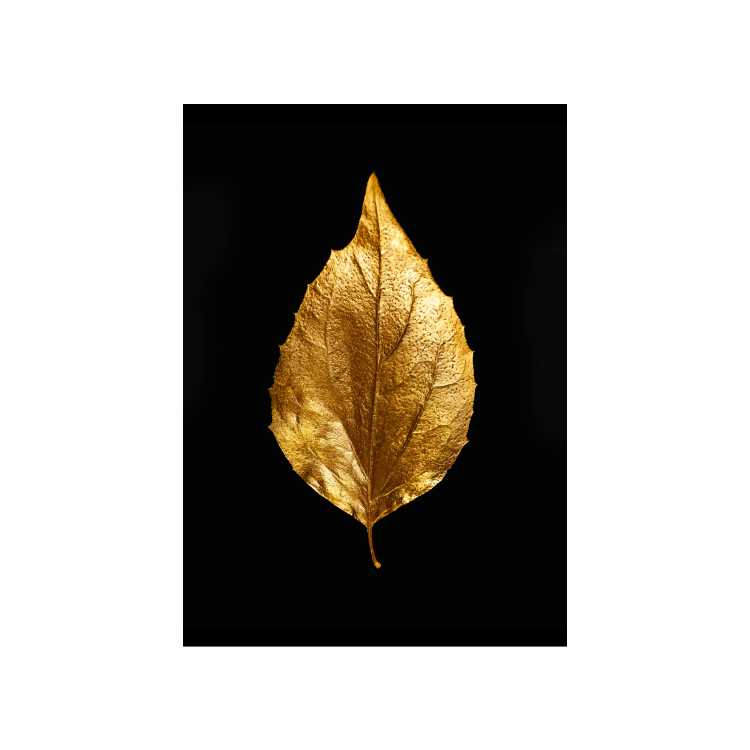 Quadro Folha Seca Preto e Dourado 2 - Tela Única