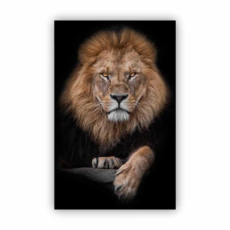 Quadro  Leão Rei Cores - Tela Única