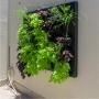 Quadro Vivo Jardim Vertical 149cm X 120cm