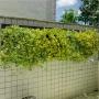 Quadro Vivo Jardim Vertical 223cm X 63cm