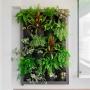 Quadro Vivo Para Jardim Vertical Vivaz Vários Tamanhos Casa Dona