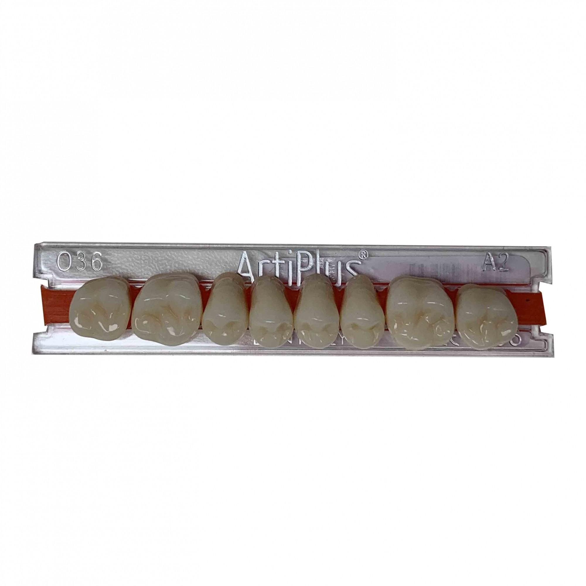 Dente Artiplus O36 Posterior Superior - Dentsply Sirona