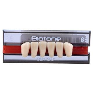 Dente Biotone 2E Anterior Inferior - Dentsply Sirona