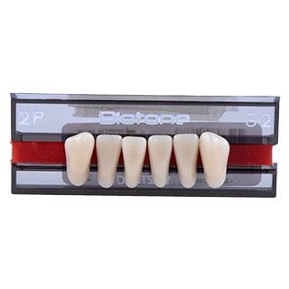 Dente Biotone 2P Anterior Inferior - Dentsply Sirona