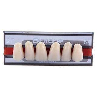 Dente Biotone 2P Anterior Superior - Dentsply Sirona