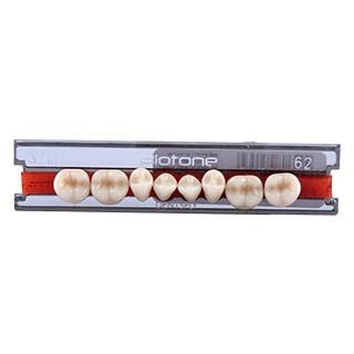 Dente Biotone 30M Posterior Inferior - Dentsply Sirona