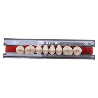 Dente Biotone 30M Posterior Superior - Dentsply Sirona