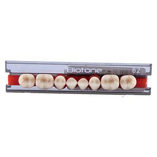 Dente Biotone 32M Posterior Inferior - Dentsply Sirona