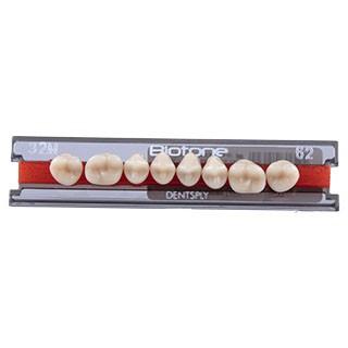 Dente Biotone 32M Posterior Superior - Dentsply Sirona
