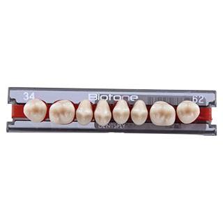 Dente Biotone 34L Posterior Superior - Dentsply Sirona