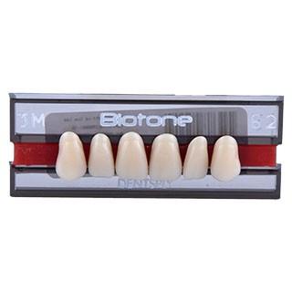 Dente Biotone 3M Anterior Superior - Dentsply Sirona