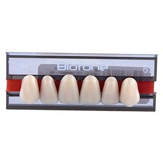 Dente Biotone 3P Anterior Superior - Dentsply Sirona