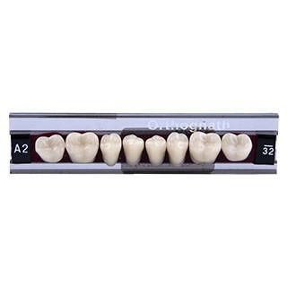 Dente Classic Orthognath U32 Posterior Inferior - Kulzer