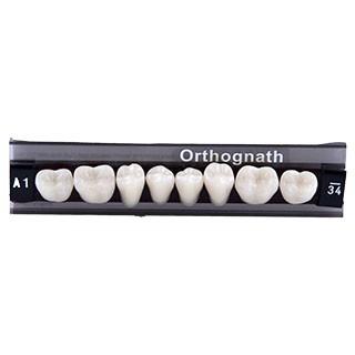 Dente Classic Orthognath U34 Posterior Inferior - Kulzer