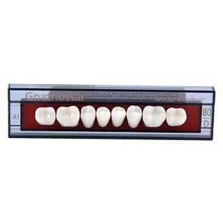 Dente Gnathostar D80 Posterior Inferior - Ivoclar Vivadent