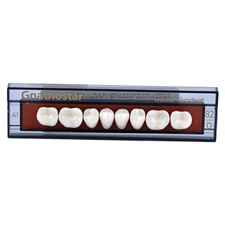 Dente Gnathostar D82 Posterior Inferior - Ivoclar Vivadent