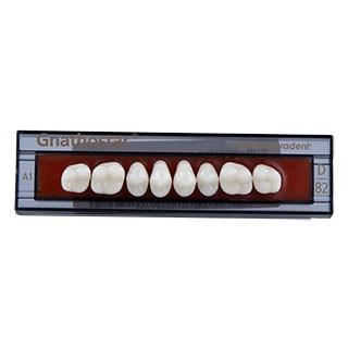 Dente Gnathostar D82 Posterior Superior - Ivoclar Vivadent