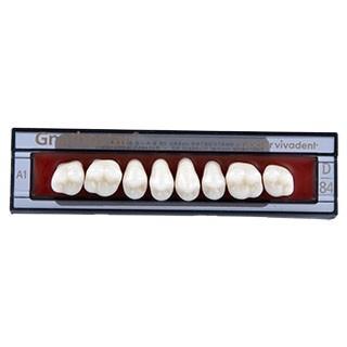 Dente Gnathostar D84 Posterior Superior - Ivoclar Vivadent