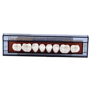 Dente Gnathostar D86 Posterior Inferior - Ivoclar Vivadent