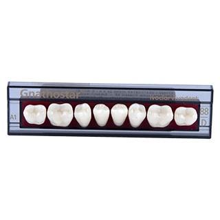 Dente Gnathostar D88 Posterior Inferior - Ivoclar Vivadent
