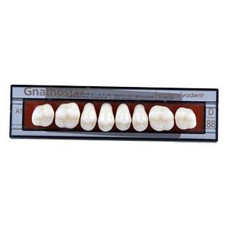 Dente Gnathostar D88 Posterior Superior - Ivoclar Vivadent