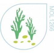 Molde Algas