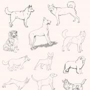 Papel de Parede Animais Cachorros Desenho