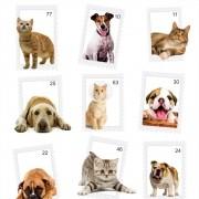 Papel de Parede Animais Dog e Cat