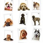 Papel de Parede Animais Pet Raças