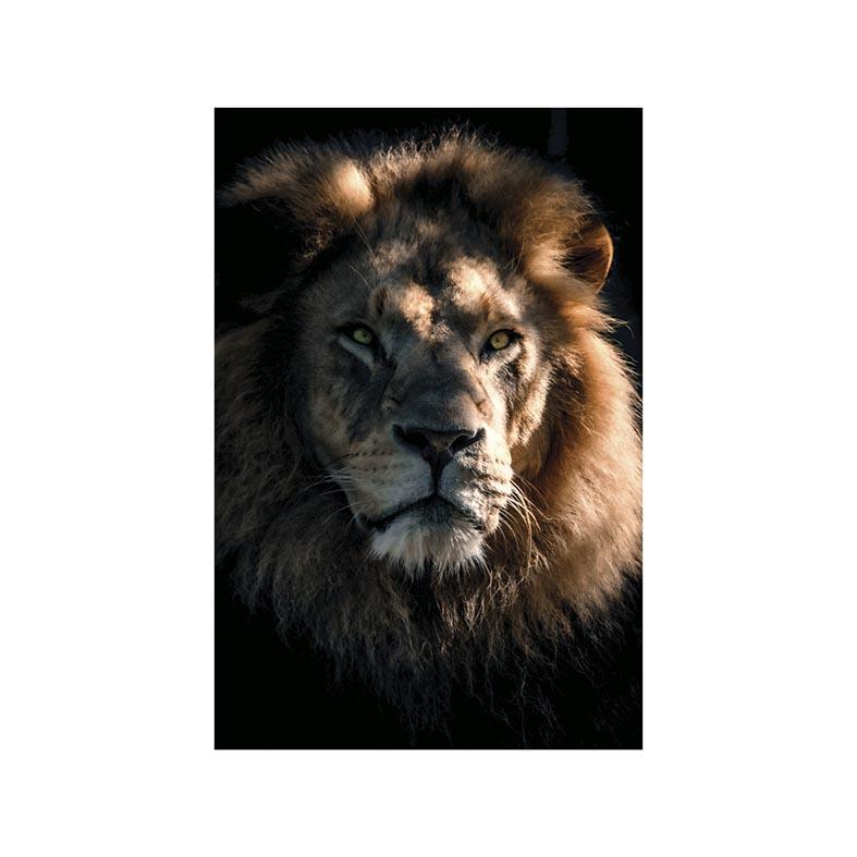 Placa Decorativa Leão de Judá
