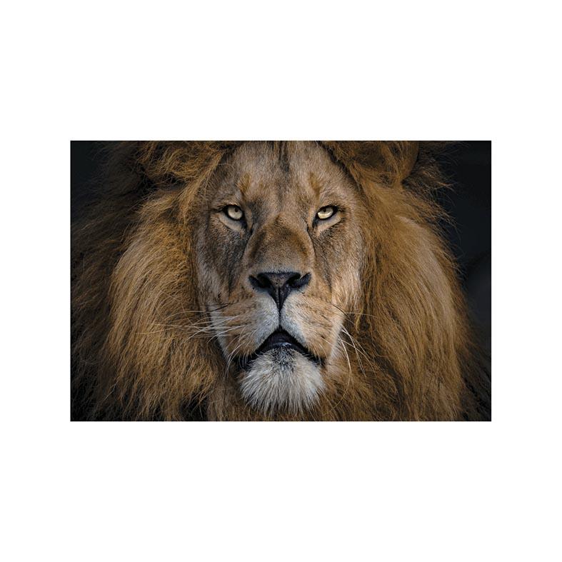 Placa Decorativa Leão de Judá Religião e Fé