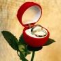 Rosa com Anéis de Compromisso banhados a Prata