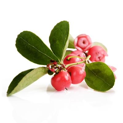 Wintergreen (TPA) - 10ml  - VM Labs