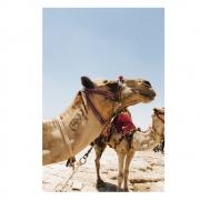 Quadro Camelos no Deserto