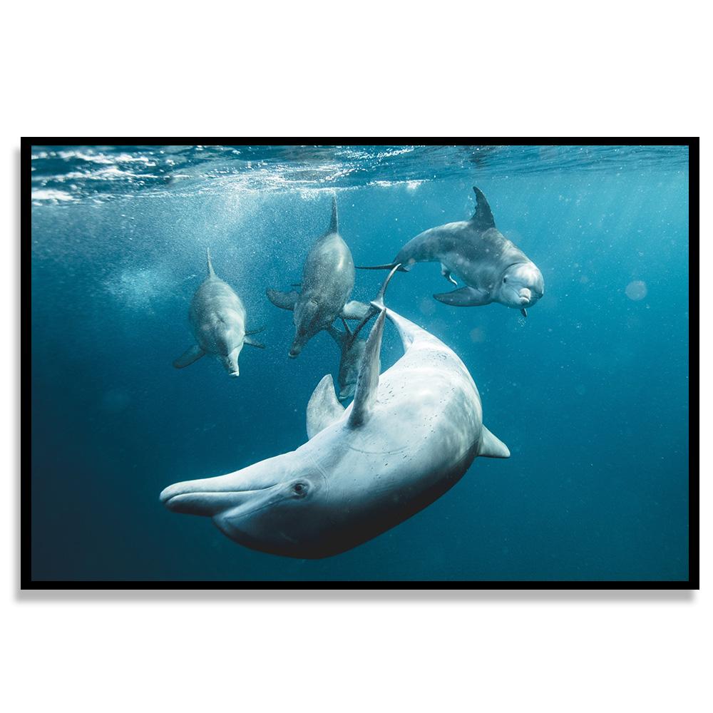 Quadro Baleias