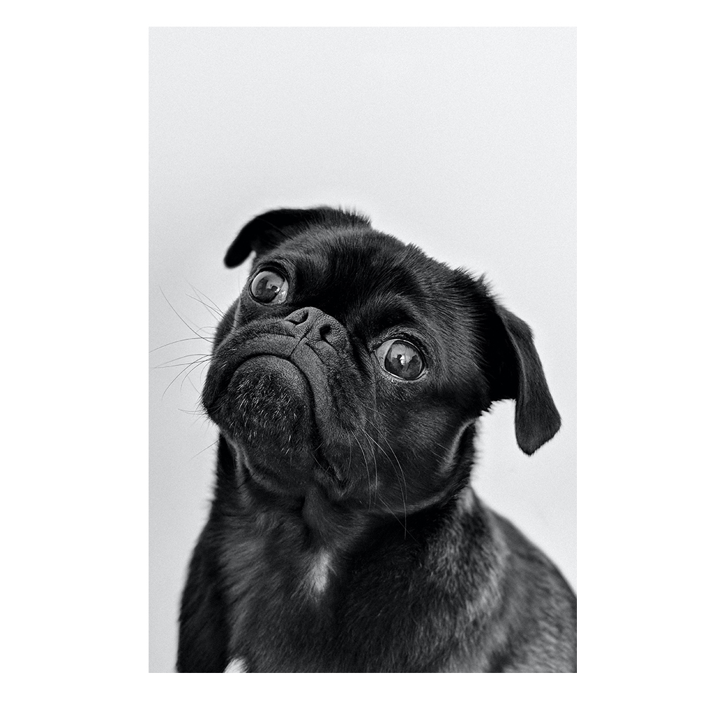 Quadro Cachorro Pensante